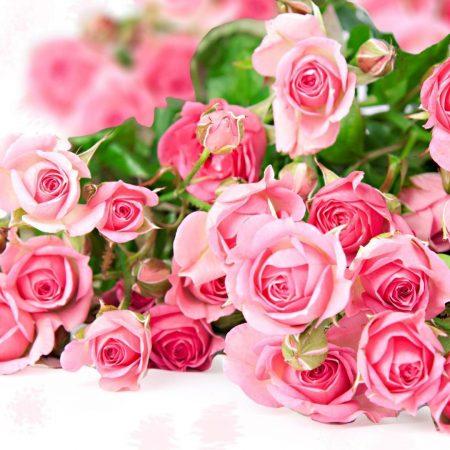 rose flower newsha 23 450x450 - چای گل محمدی و تاثیر آن بر لاغری