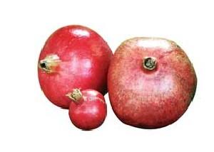 59b7ae1c34cf381f0a55025fae6dcfbd - پیشگیری از سرطان با مصرف ریز میوههای قرمز