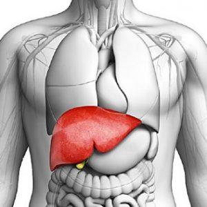 healthy liver 300x300 - بهترین ویتامین ها برای داشتن کبد سالم