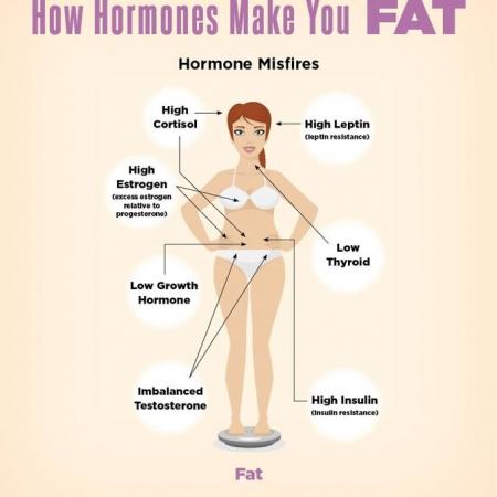 تاثیر هورمون بر چربی بدن